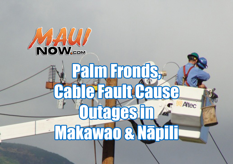 Maui Now 5 058 Lose Power Outages Caused By Palm Fronds Cable Fault