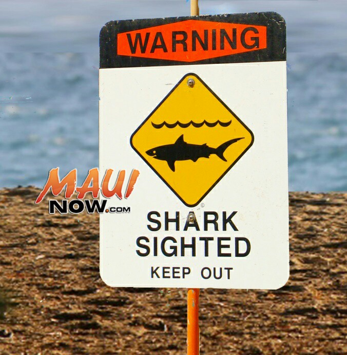 12-Foot Tiger Shark Sighting Prompts Temporary Closure of South Maui Shoreline