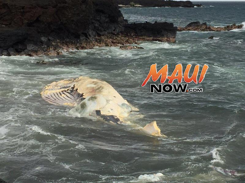 Maui's ʻĀhihi-Kinaʻu Reopens, Whale Carcass No Longer Detectable