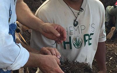 Hawaiʻi Industrial Hemp Pilot Program Begins