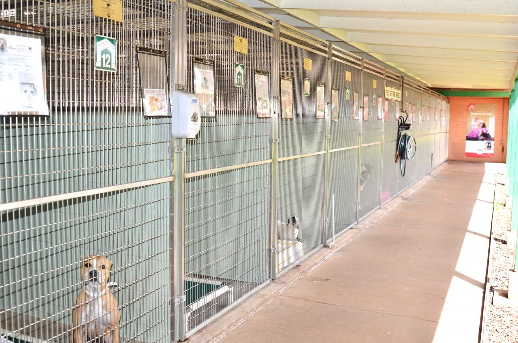 Short Term Shelters : Maui now immediate short term foster homes sought for