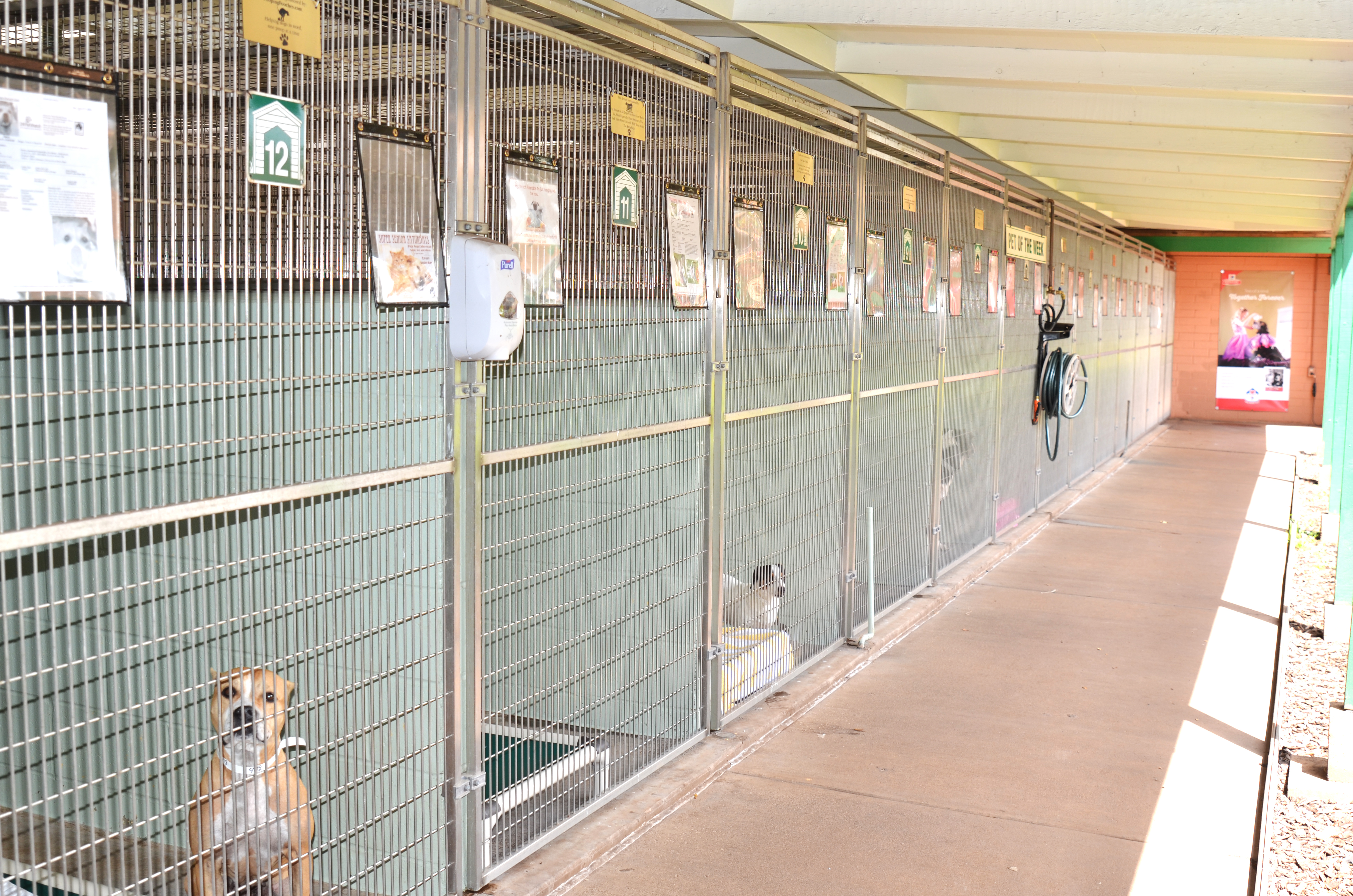 Maui Kennels Crowded, Foster Homes Needed for Dogs