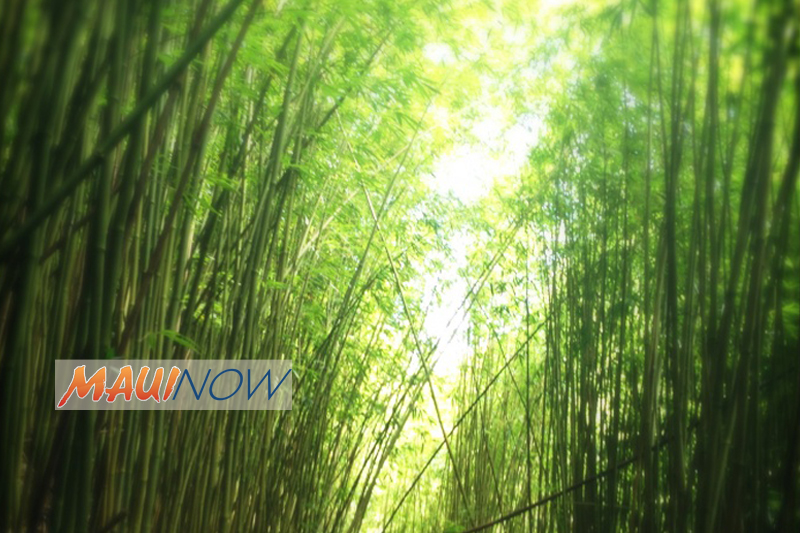 "Five Hikers Airlifted from Maui's ""Bamboo Forest"""