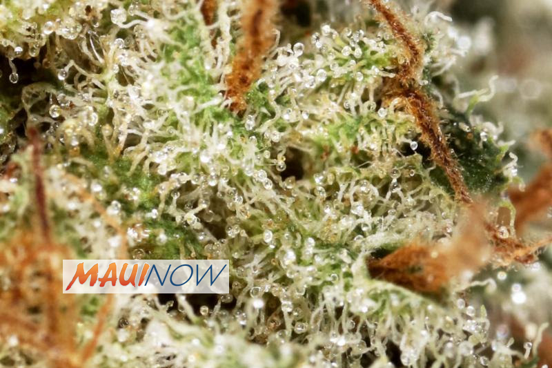 UHMC Talk to Explore Medical Cannabis