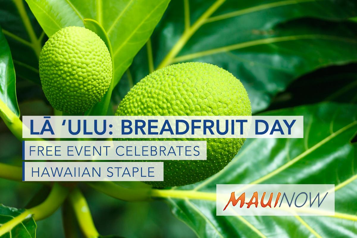 Maui Nui Botanical Gardens Awarded Oha ʻAhahui Grant for Lā ʻUlu (Breadfruit Day)