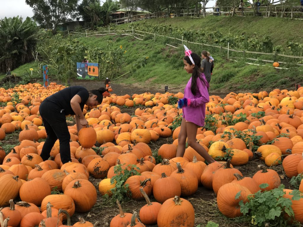 Chef Jacquelyn Torres Of The Wooden Crate Visited Kula Country Farm To Hand Pick Pumpkins For Saturdays Halloween Event PC Lumeria Maui