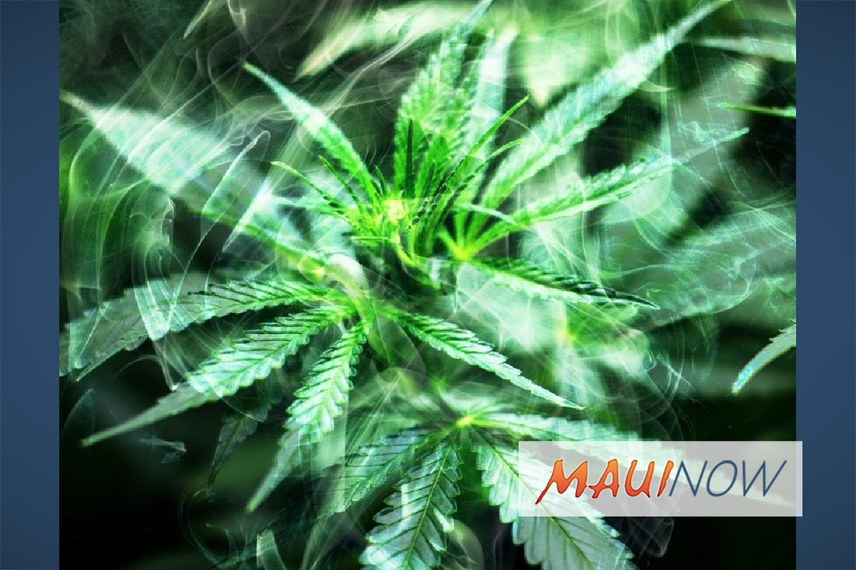 Medical Cannabis Researcher to Discuss Pain Management on Maui