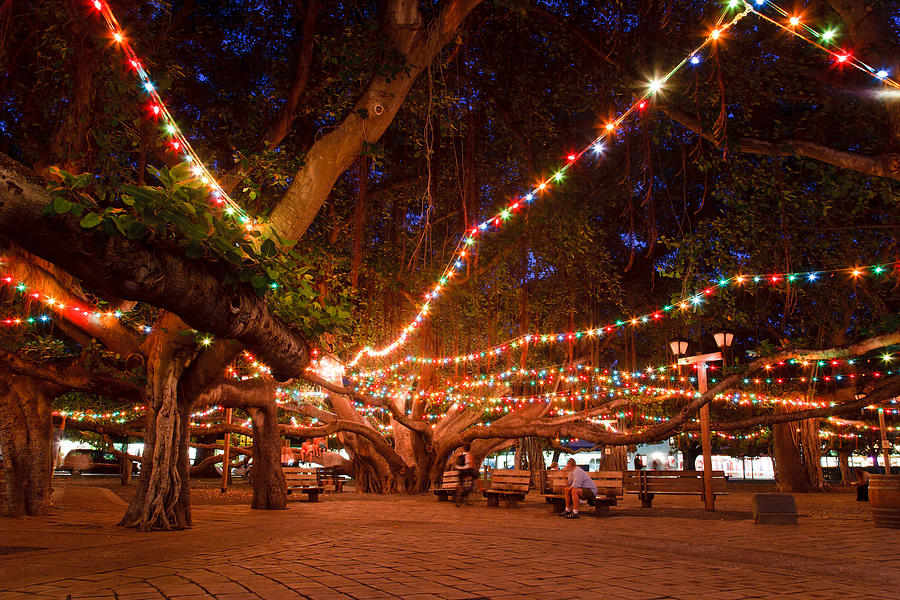 County: Lahaina Banyan Tree Will be Lit This Holiday Season