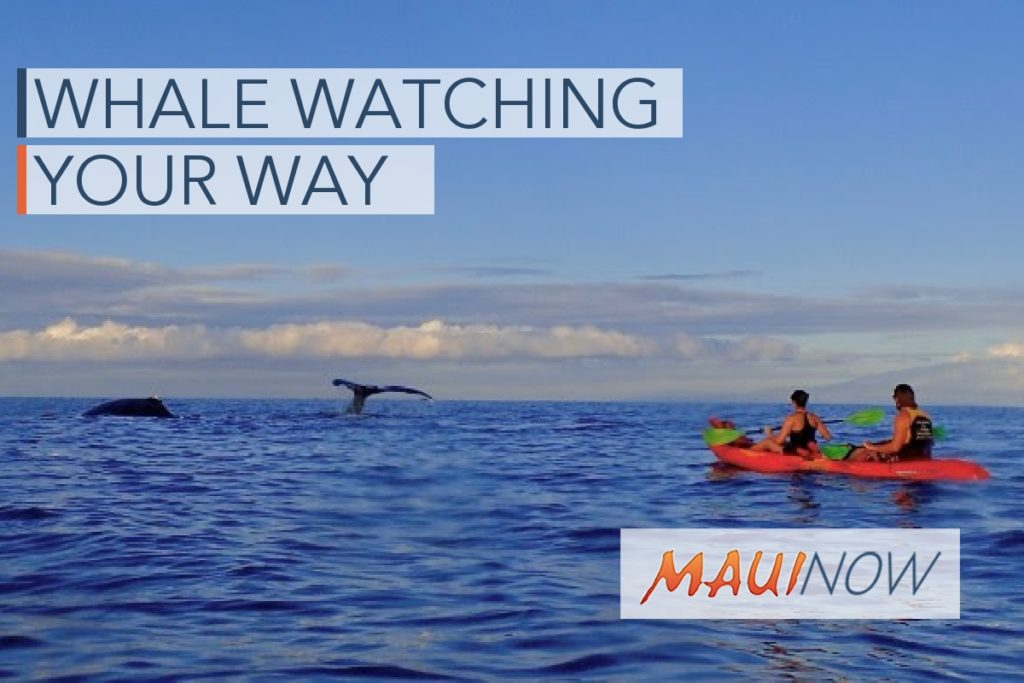 Whale Watching Your Way