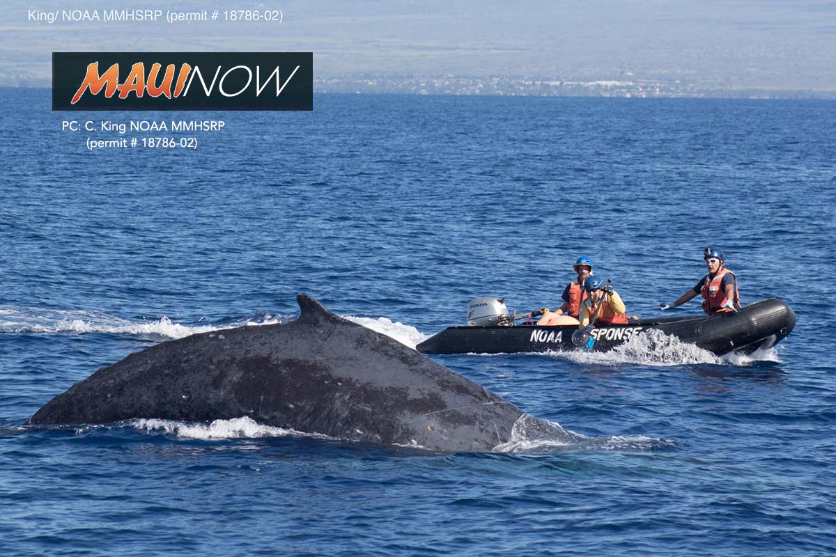 NOAA: 76 Large Whale US Entanglements in 2017