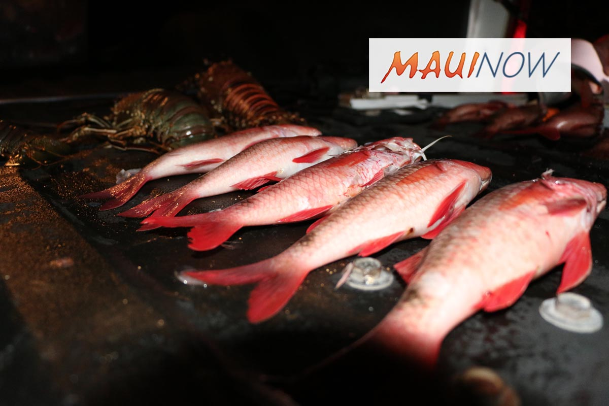 """""""Weekend Warriors"""" Required to Get CM License for Selling Fish"""