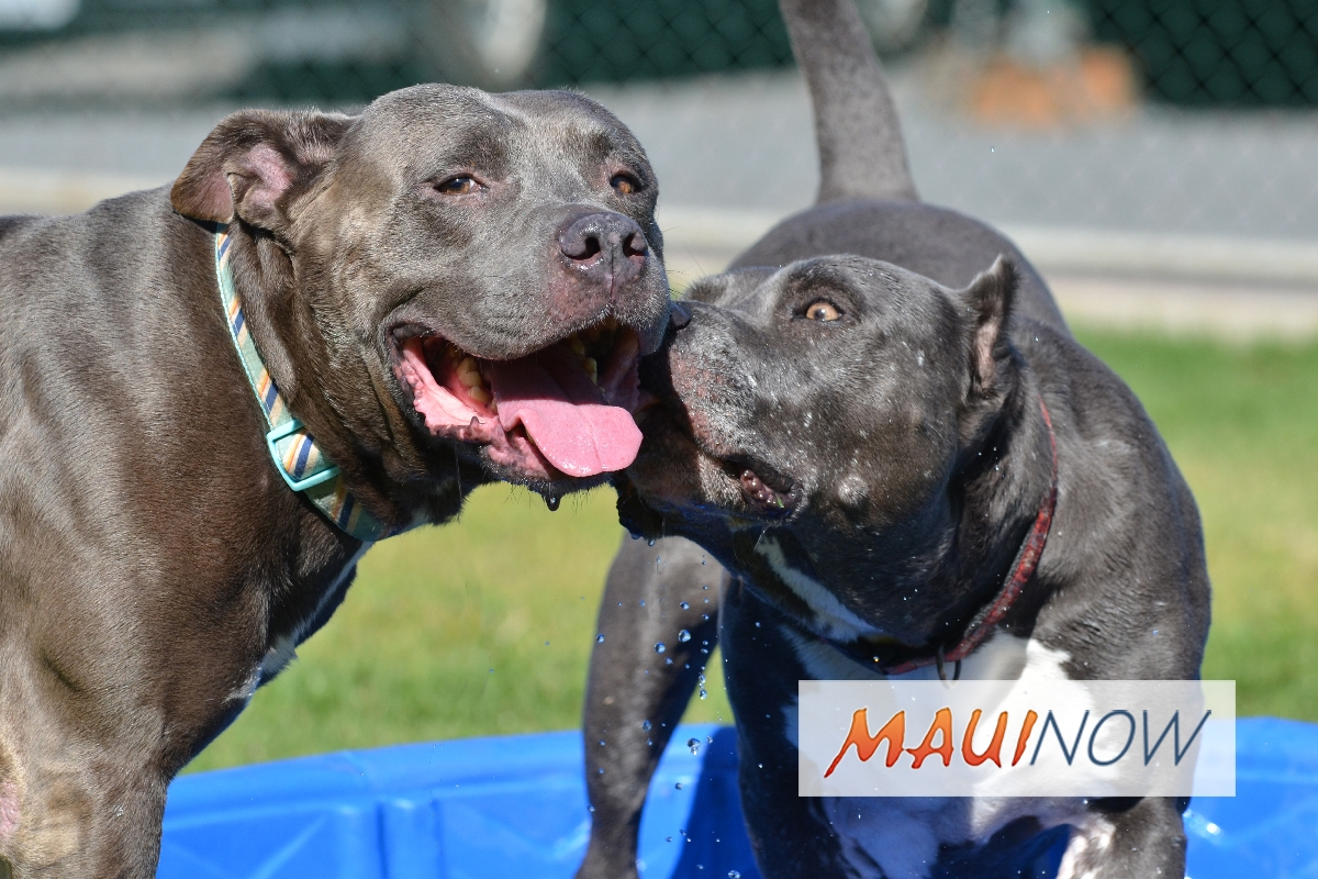 Maui Humane Society Issues SOS for Dog Fosters