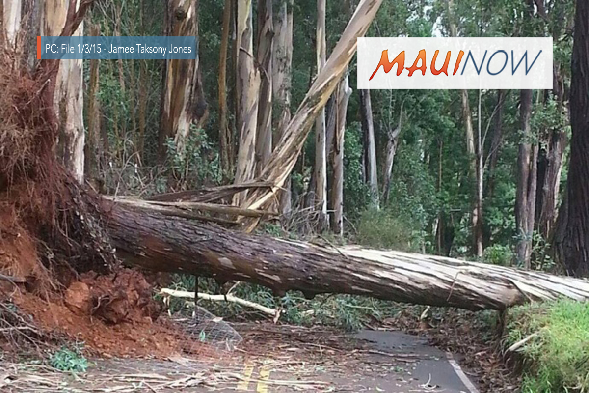 Pi'iholo Ranch Agrees to Partner with County to Remove Trees