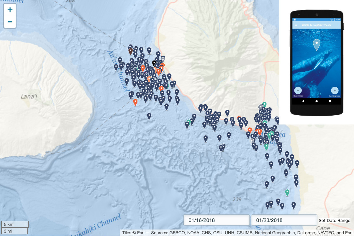 Maui Now : PWF Launches Whale and Dolphin Tracker App
