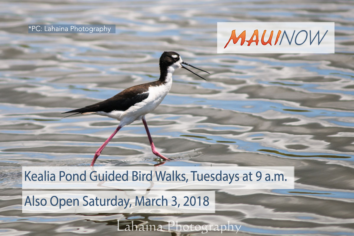 Keālia Pond Offers Guided Walks Featuring Native Birds