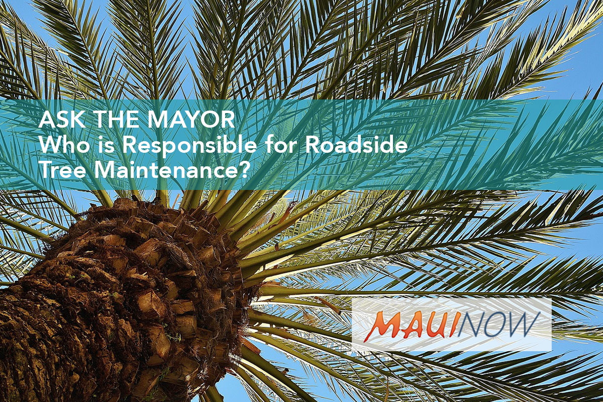 Ask the Mayor: Who is Responsible for Roadside Tree Maintenance?