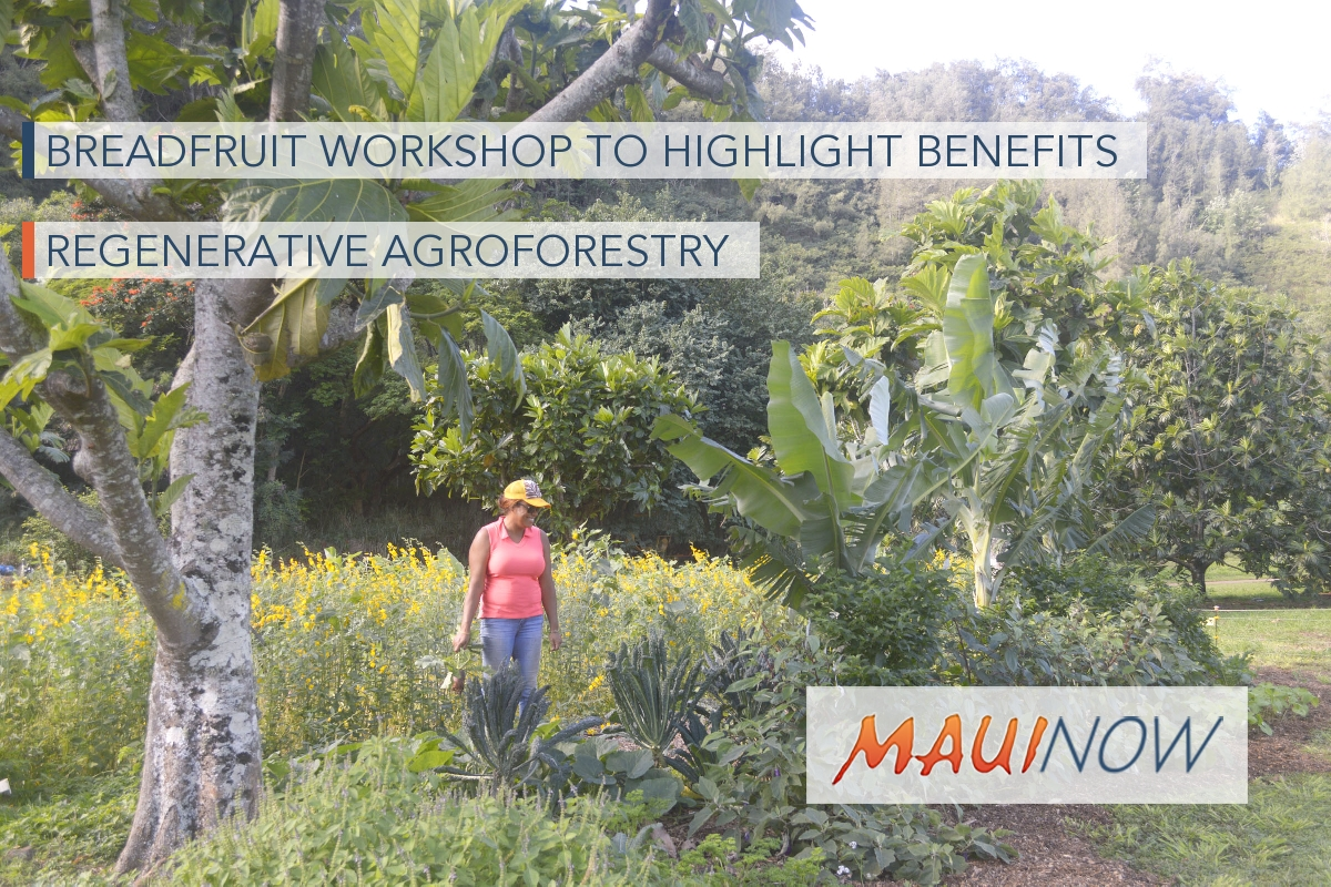 Breadfruit Workshop to Highlight Benefits of Regenerative Agroforestry