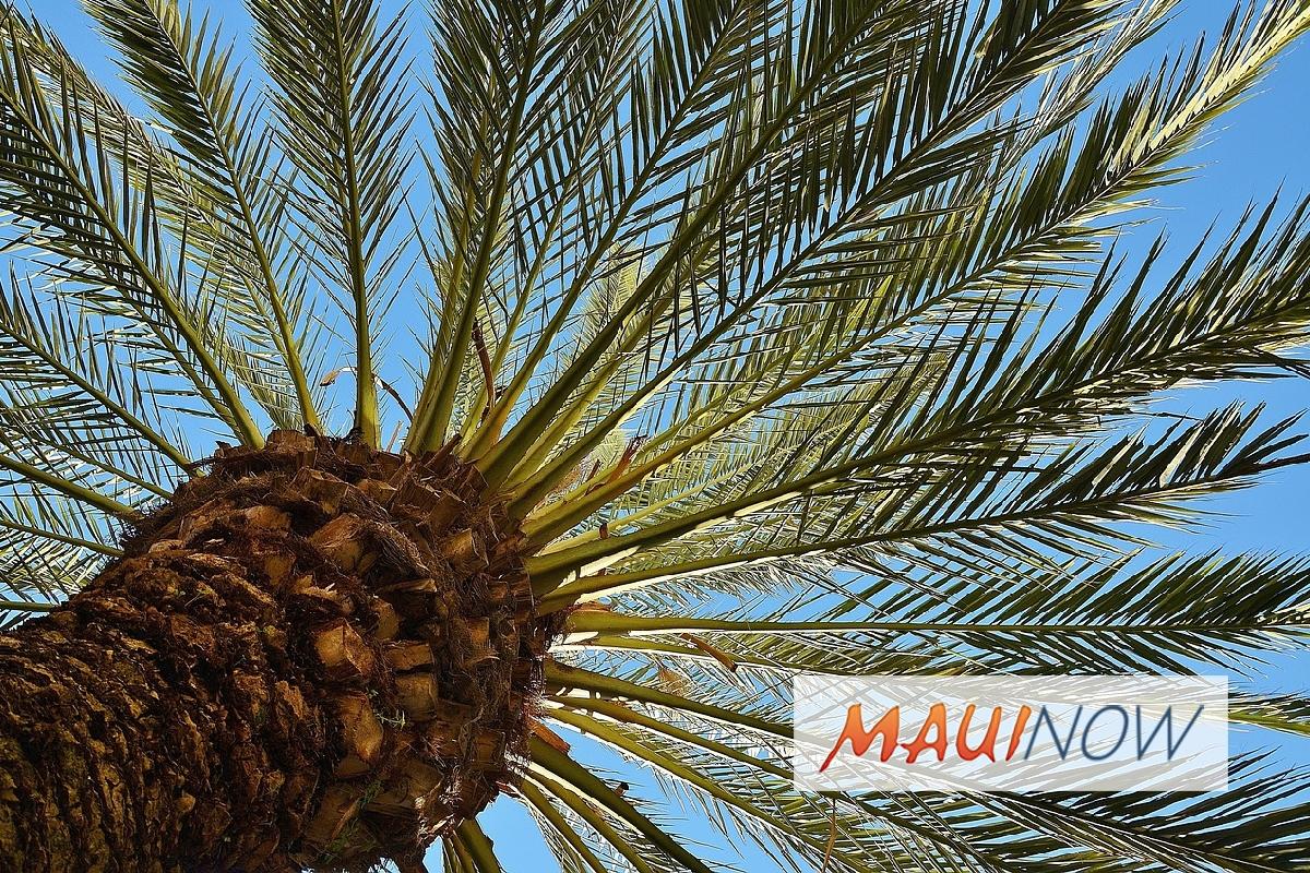 "Hawaiʻi Neighborhoods Receive ""Tree City"" Honor"