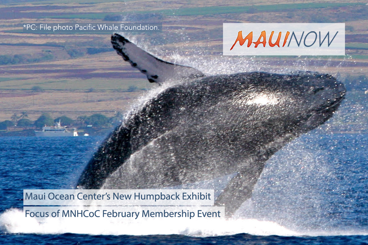 New Humpback Exhibit Focus of MNHCoC February Membership Meeting