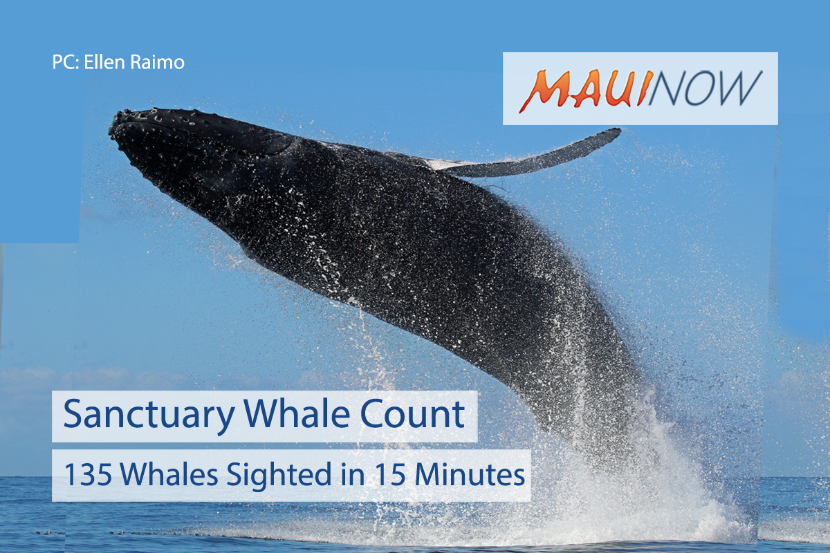 135 Whales Sighted in 15 Minutes