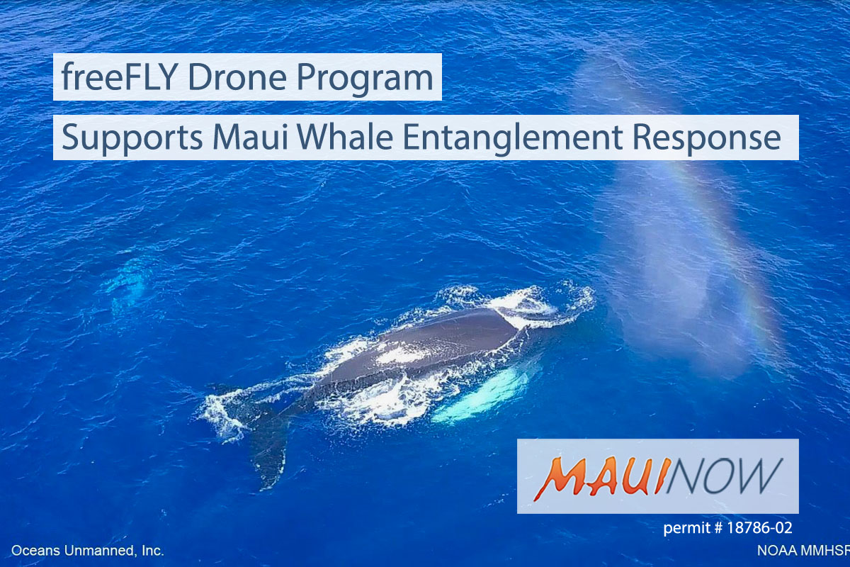 Drone Program to Support Maui Whale Entanglement Response