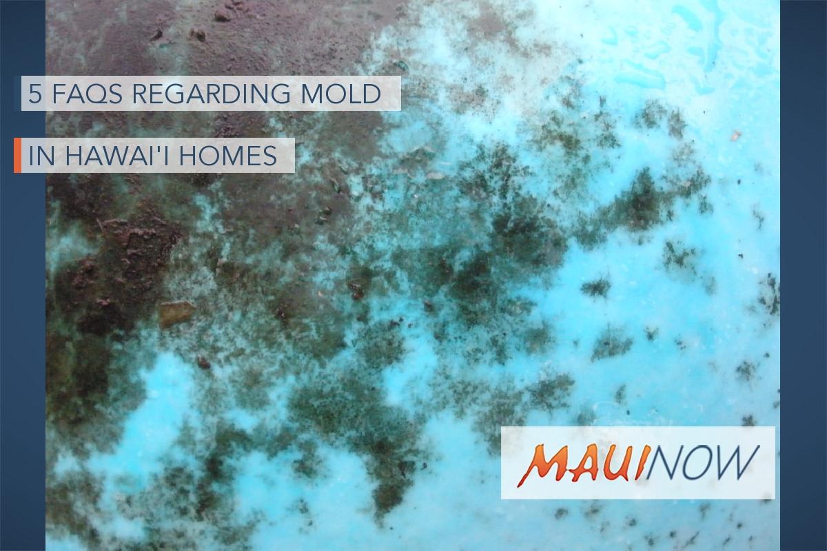 5 FAQs Regarding Mold in Hawaiʻi Homes