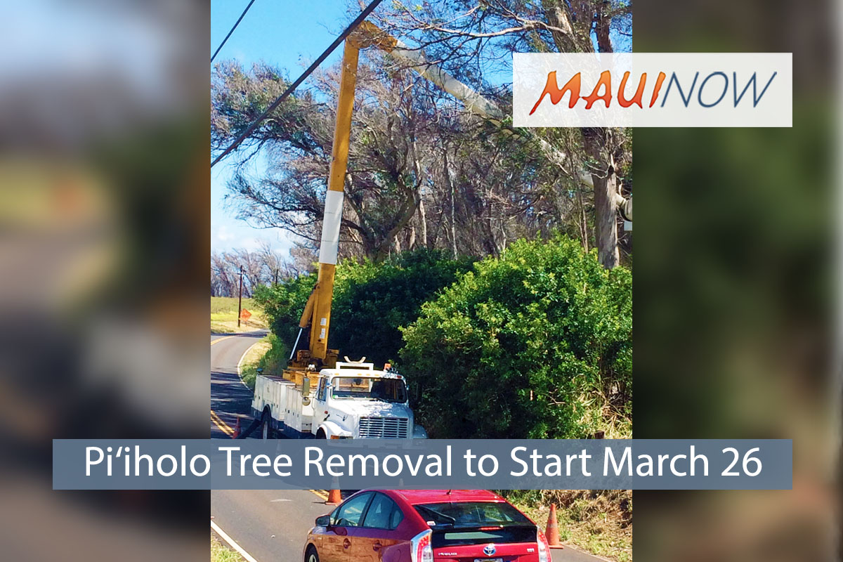 Pi'iholo Tree Removal, Road Closure to Start March 26