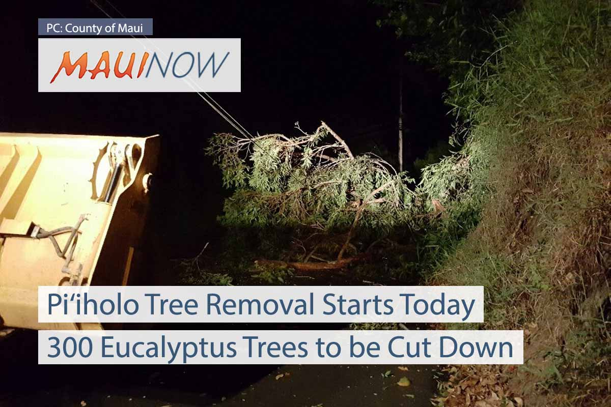 Removal of 300 Trees on Pi'iholo Rd Starts Today