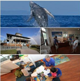 Sanctuary Saturday! Whale Visitor Center Now Open on Last Saturdays