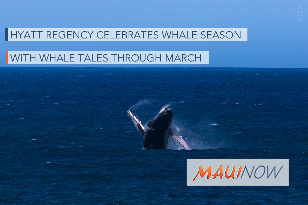 Hyatt Regency Celebrates Whale Season with Whale Tales through March