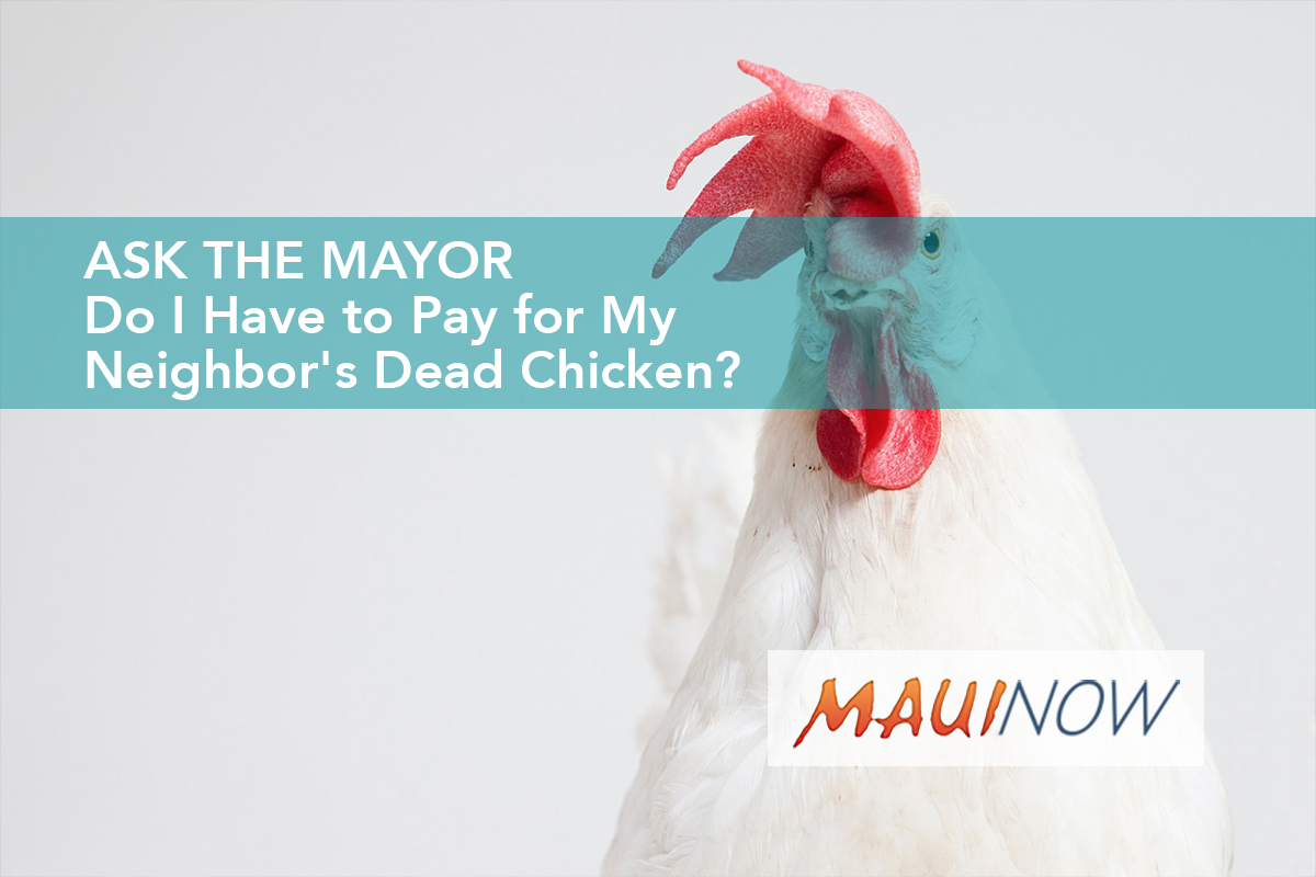 Ask the Mayor: Do I Have to Pay for My Neighbor's Dead Chicken?