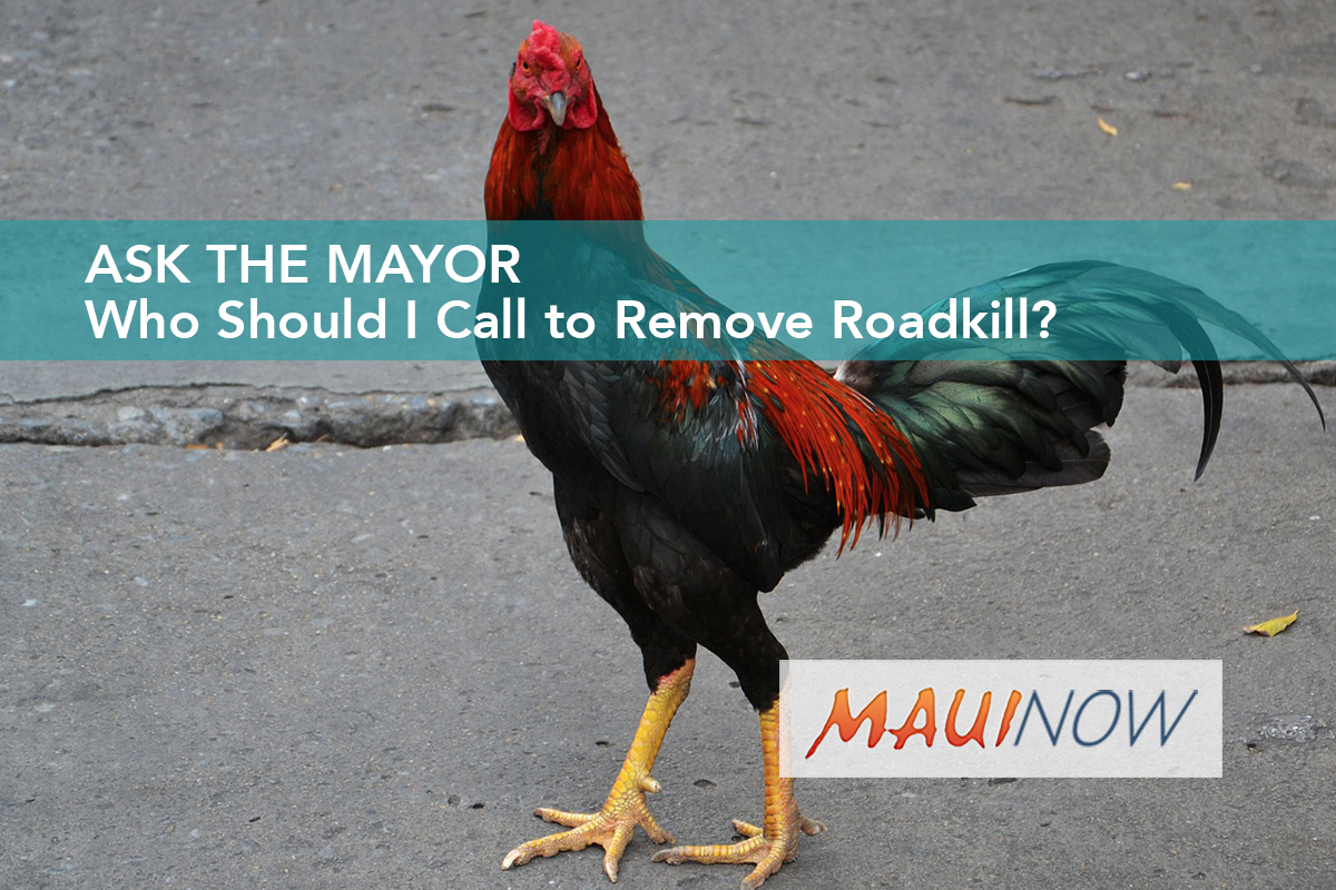 Ask the Mayor: Who Should I Call to Remove Roadkill?