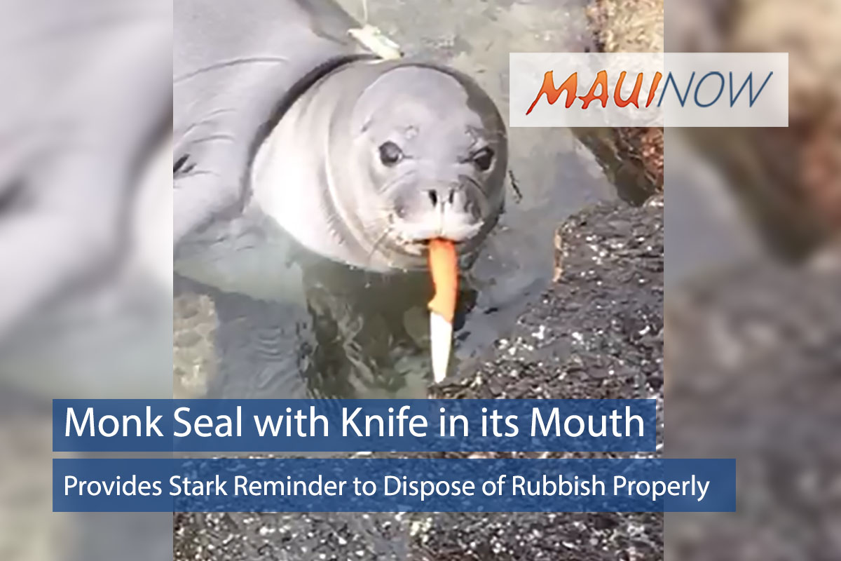 Monk Seal with Knife in its Mouth Sparks Concern Over Proper Trash Disposal