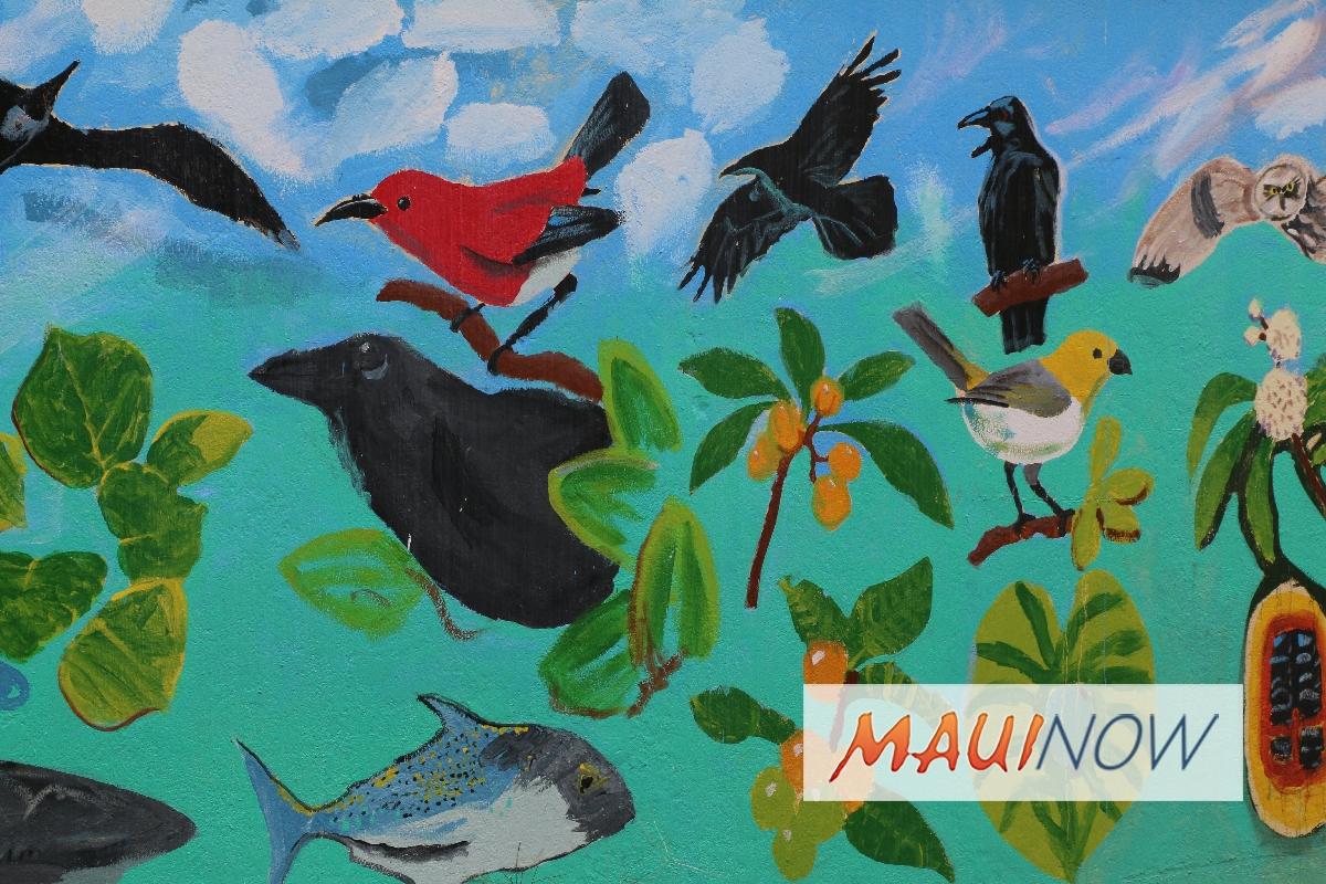 ʻAlalā Naming Contest Begins Online, April 9