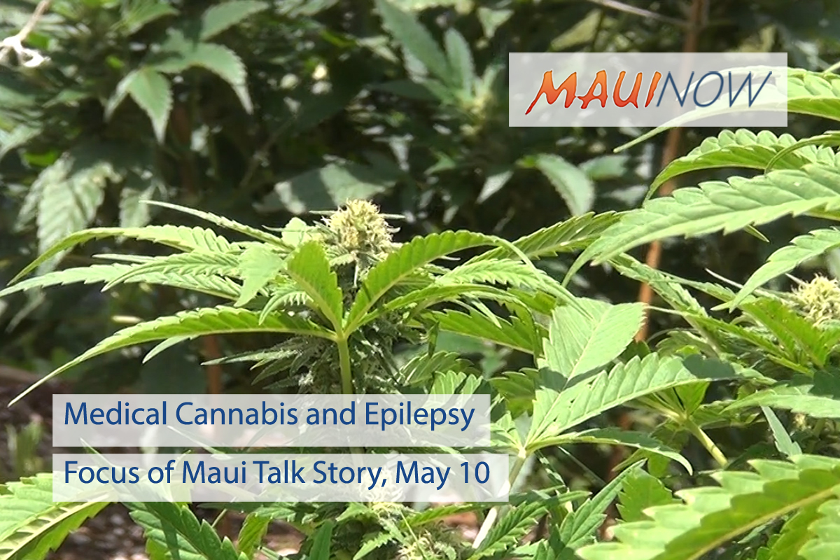 Medical Cannabis and Epilepsy Focus of Maui Talk Story