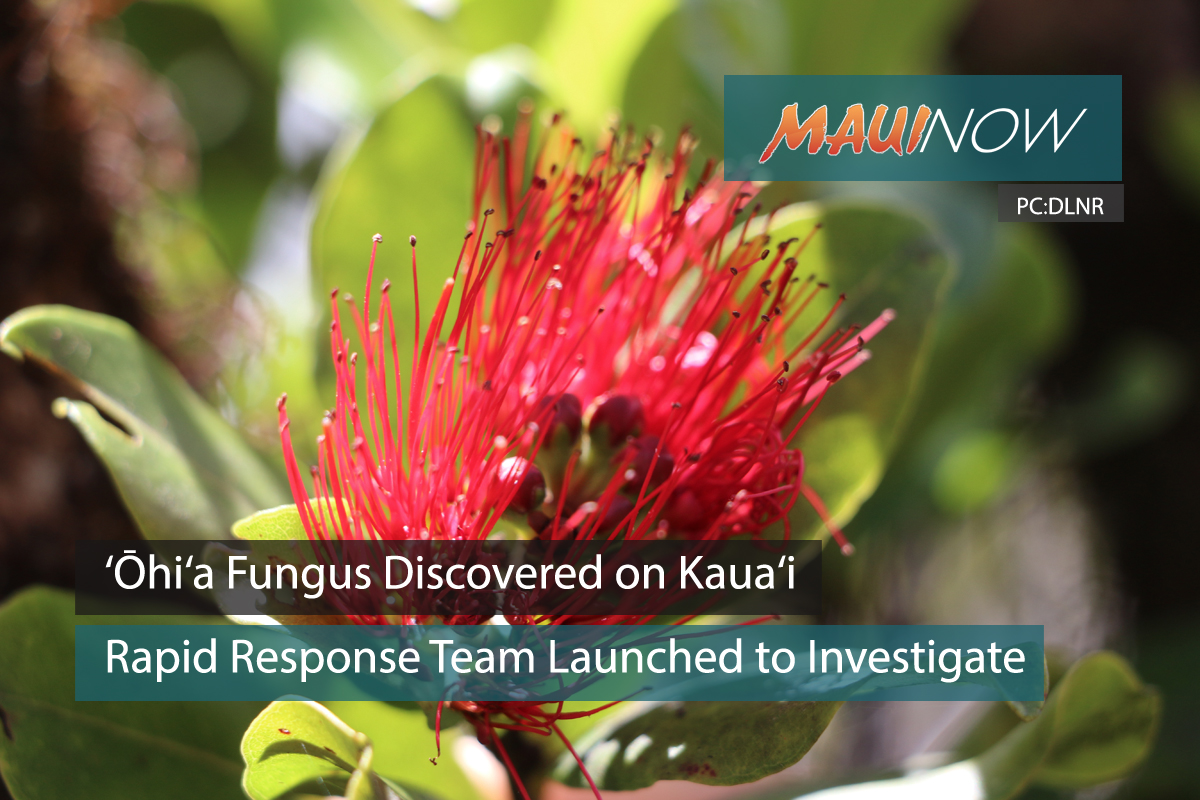 BREAKING: 'Ōhi'a Fungus Discovered on Kaua'i