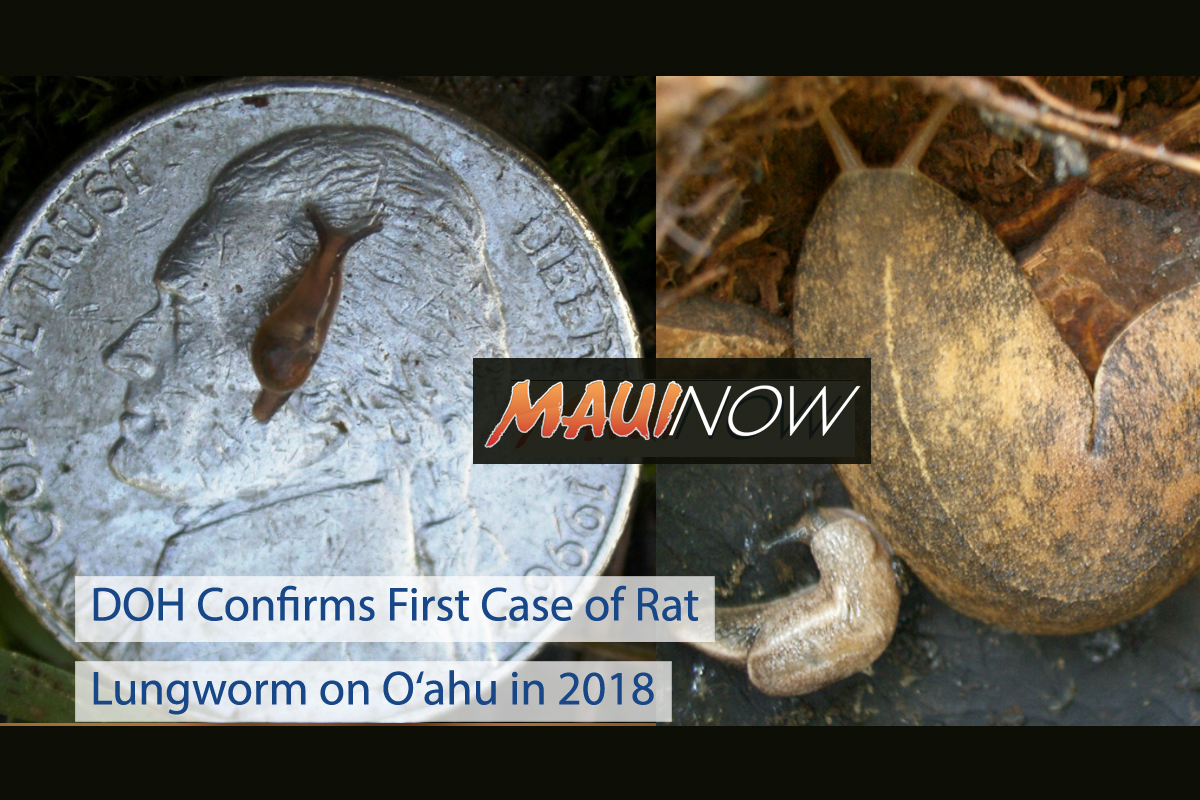 DOH Confirms First Case of Rat Lungworm on O'ahu in 2018
