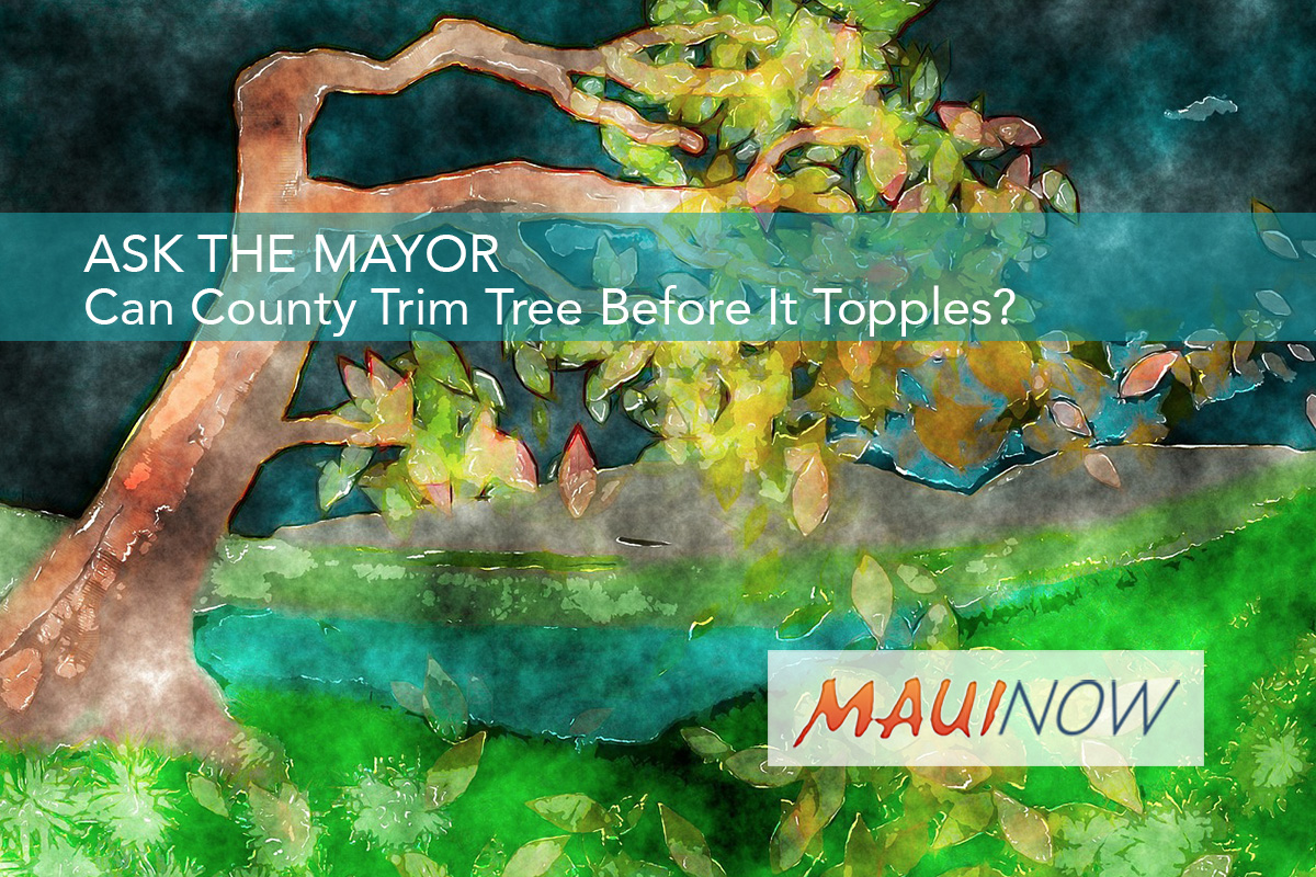 Ask the Mayor: Can County Trim Tree Before It Topples?