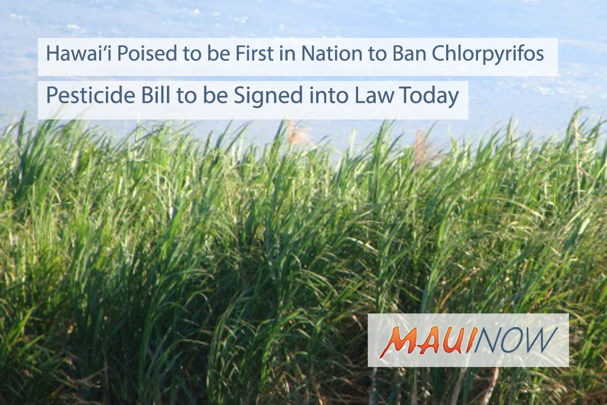 Hawaiʻi Pesticide Bill Banning Chlorpyrifos, First in Nation to Become Law