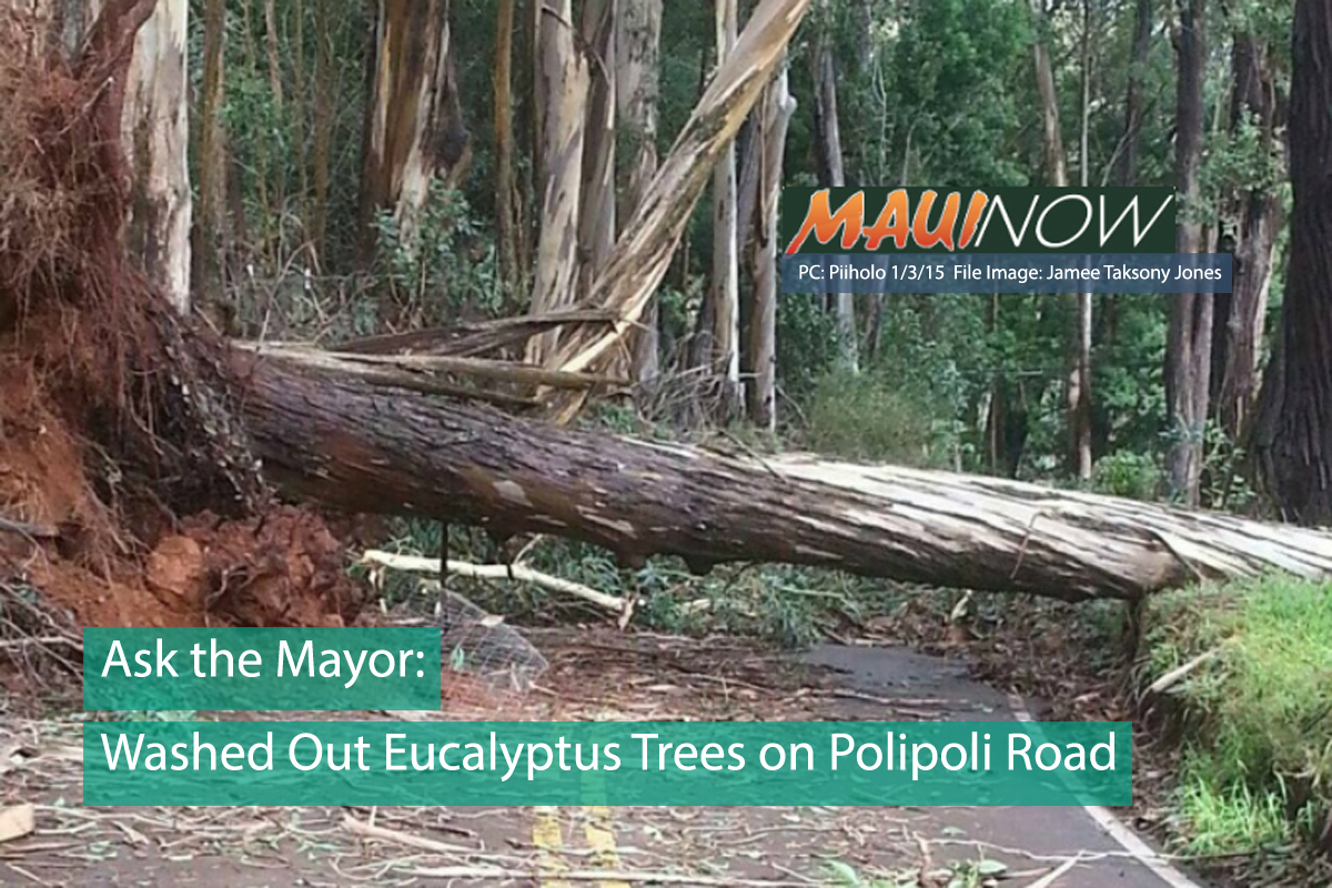 Ask the Mayor: Washed Out Eucalyptus Trees on Polipoli Road