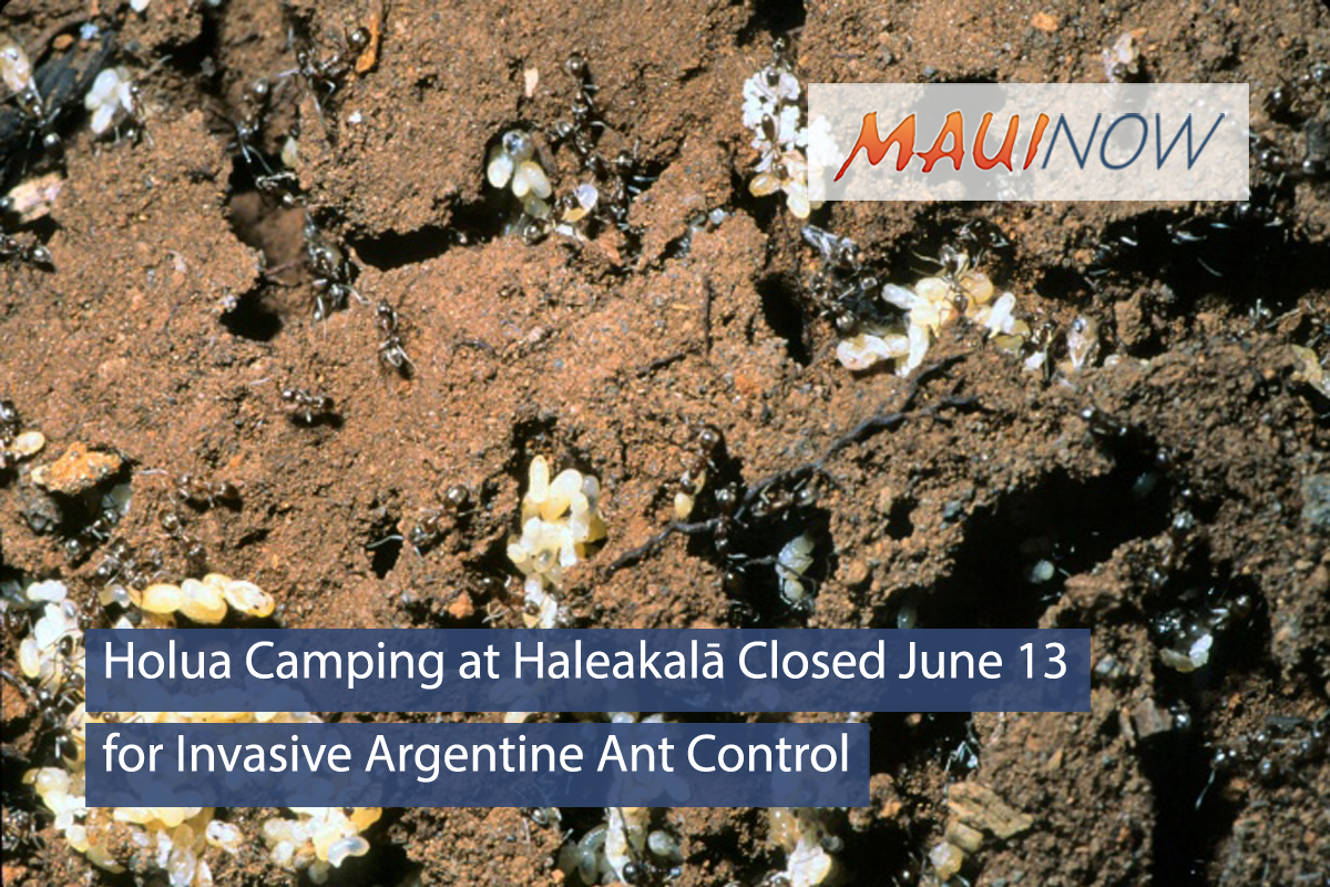 Holua Camping at Haleakalā Closed June 13 for Invasive Ant Control