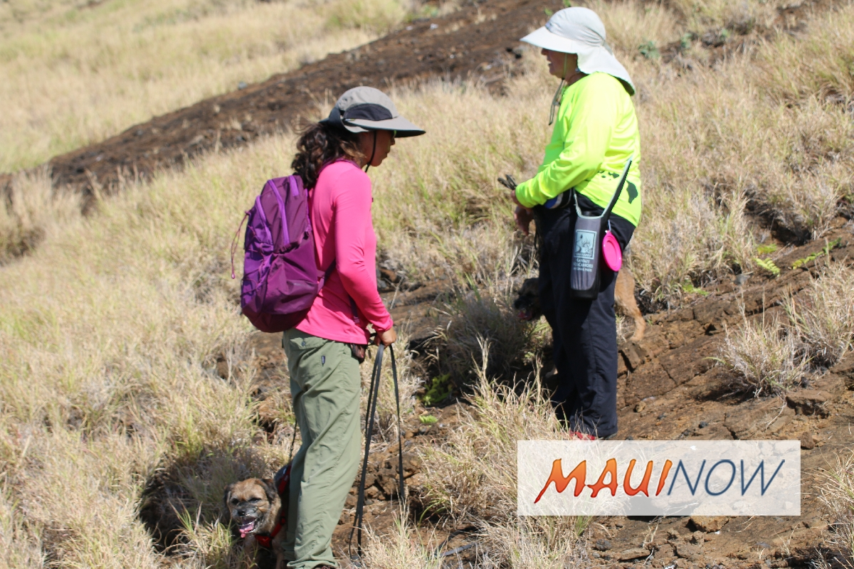 Rat Sniffing Dogs Deployed on Lehua Island