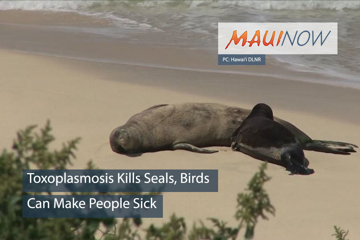 Recent Hawaiian Monk Seal Deaths Linked to Toxoplasmosis