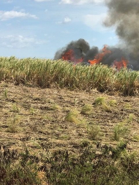Maui Firefighters Douse Flare-Ups at 2,500 Acre Burn Area