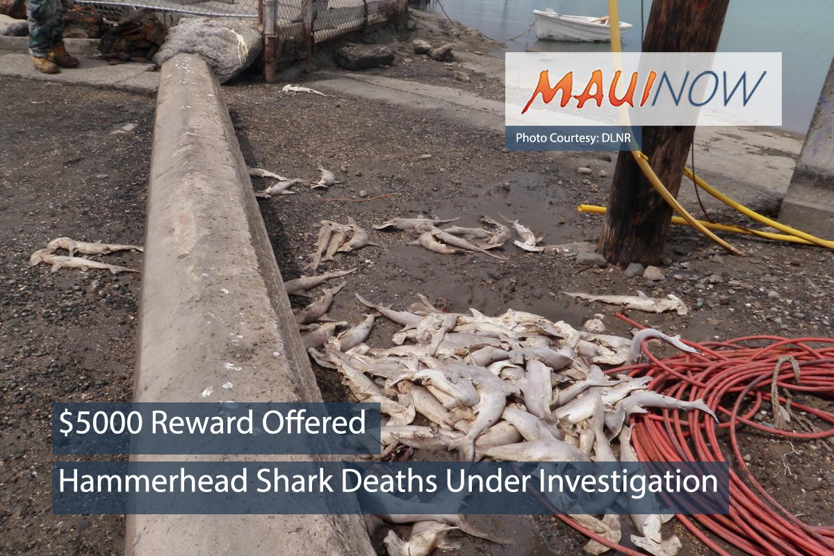 $5,000 Reward Offered for Information on Hammerhead Shark Deaths