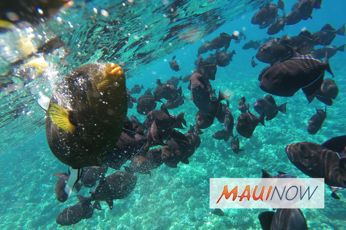 """Groups Urge End to """"Reef Wildlife Trafficking"""""""