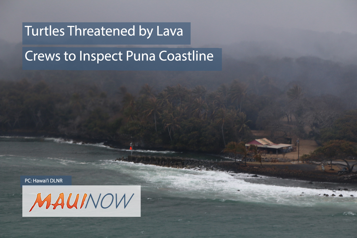 Crews Inspect Puna Coastline for Turtles Threatened by Lava