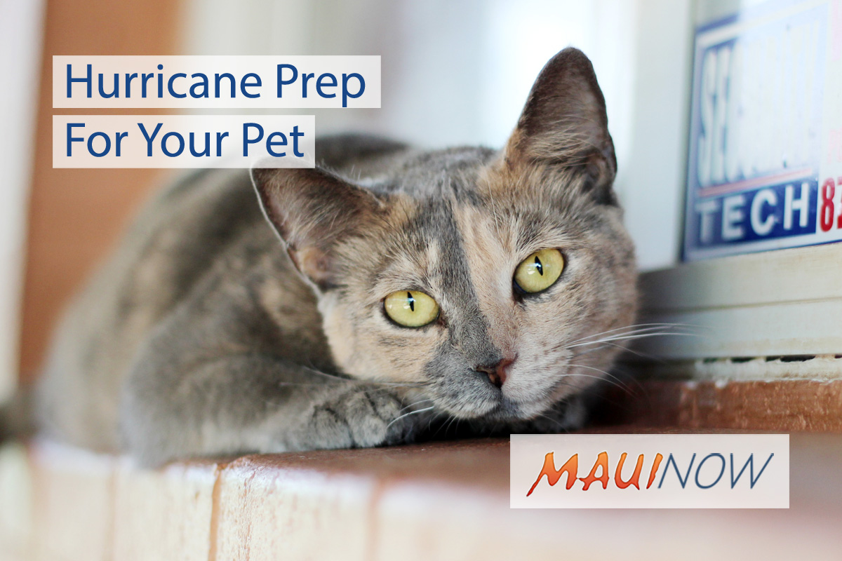 Hurricane Prep For Your Pet