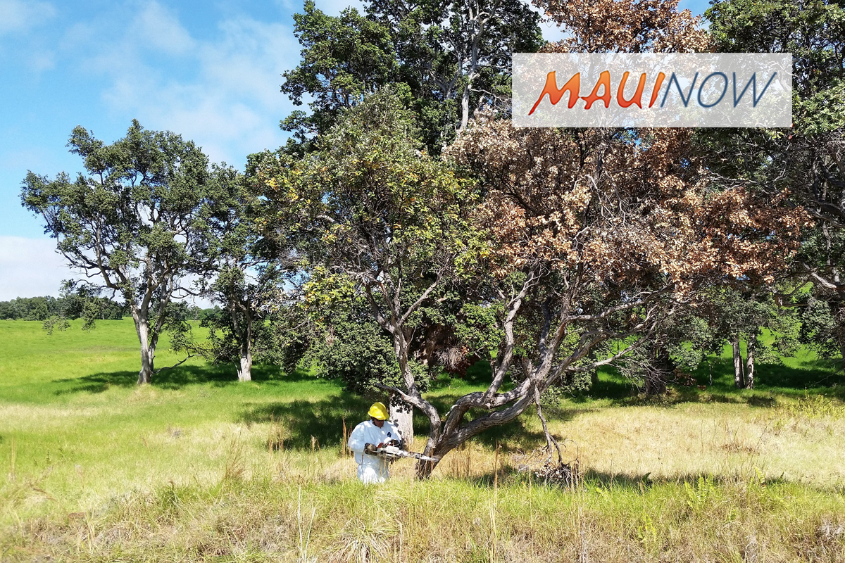 Cash Prize for Solution to Microscopic Fungi Destroying 'Ōhi'a