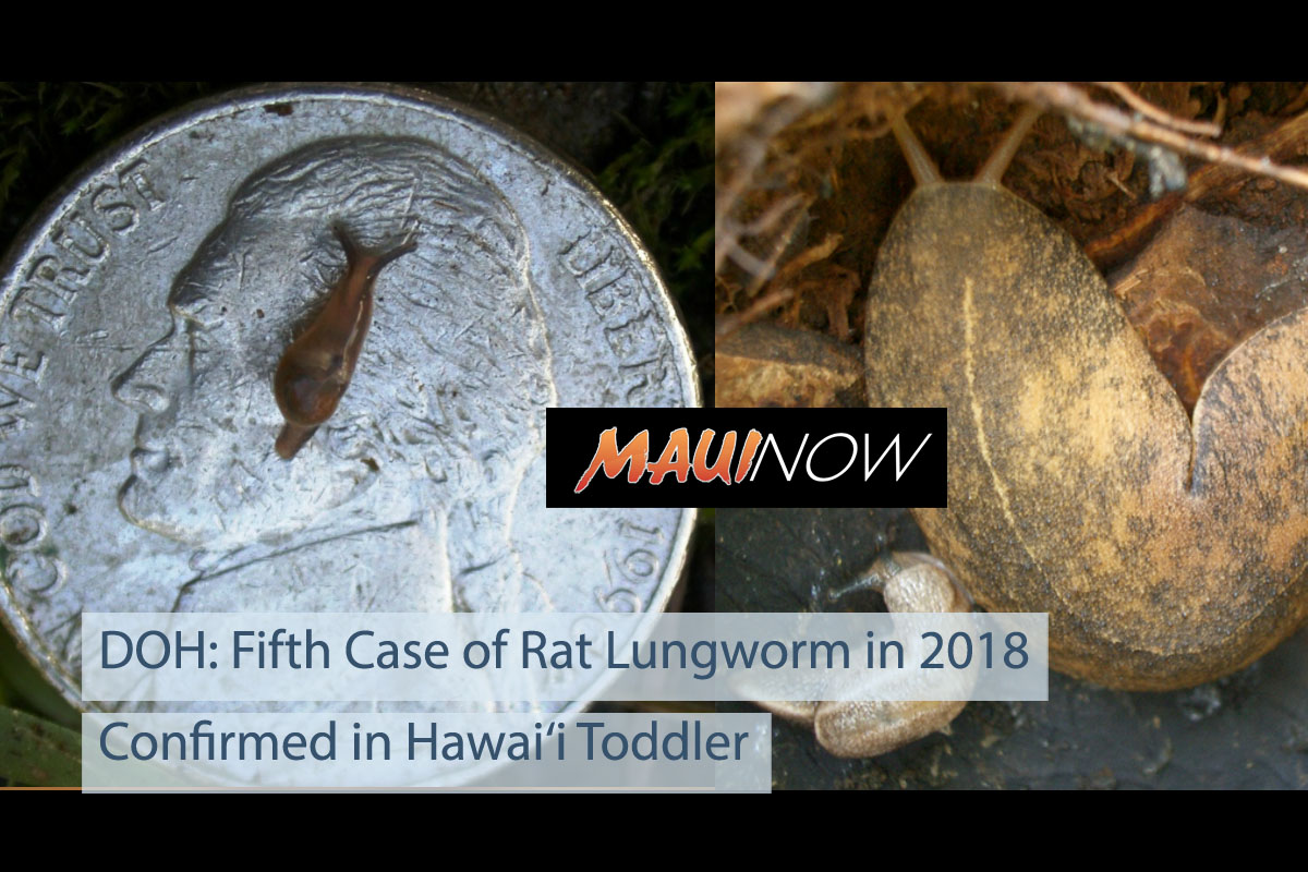 Fifth Hawai'i Case of Rat Lungworm in 2018 Confirmed in Toddler